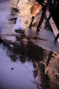Ph Marzia Corteggiano, Rain,  Le Tante Facce del Colore - L'uomo e il territorio, I colori e l'ambiente, Mostre Fotografiche Diffuse, Magliano Sabina